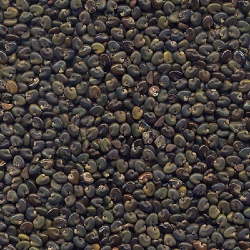 Onde Encontro Semente Adubação de Pasto Pederneiras - Semente de Adubação Verde