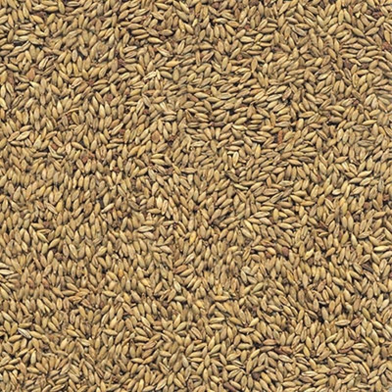 Preço de Semente de Feno de Cavalo Guarulhos - Semente de Pasto para Feno