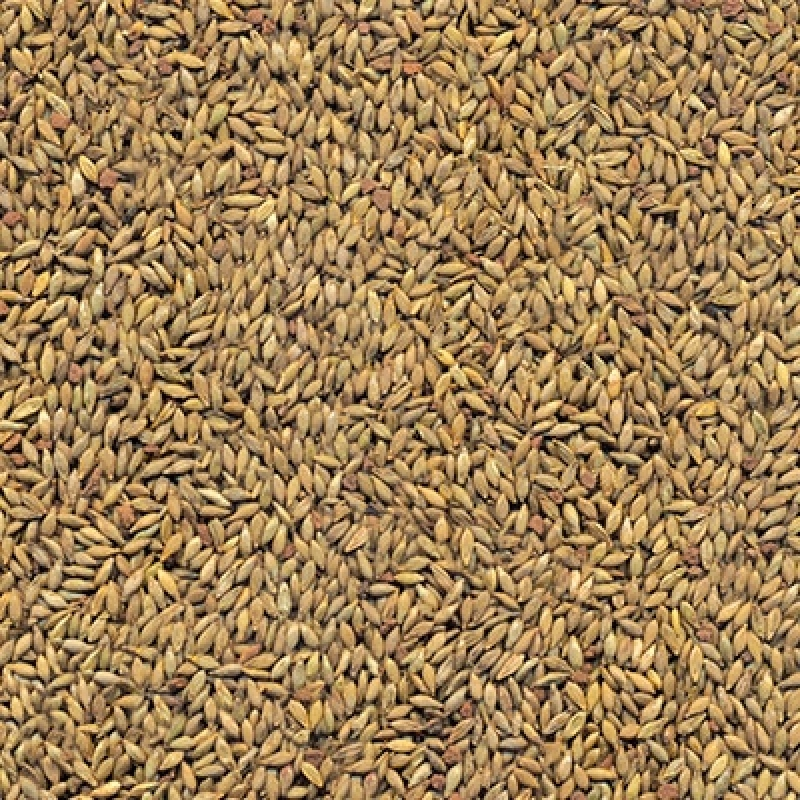 Preço de Semente de Pasto para Feno Jaboticabal - Semente de Feno para Cavalo