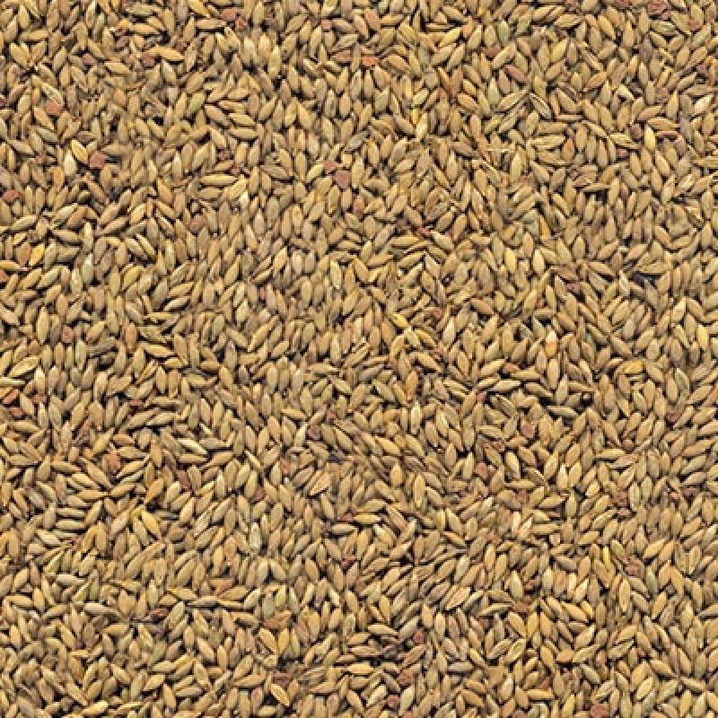 Semente Formação Pastagem Preços Frutal - Sementes de Pastagens para Bovino