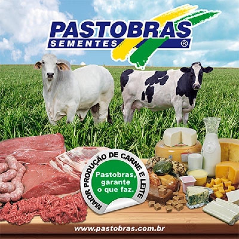 Semente Formação Pastagem Mogi das Cruzes - Sementes de Pastagens para Bovino