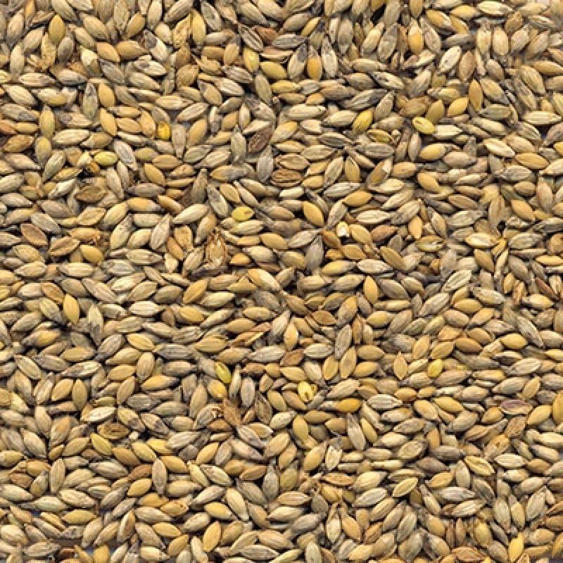 Sementes Pastagem Preços Marília - Sementes para Formação de Pastagens