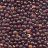 busco por semente adubação de pasto Itaquaquecetuba