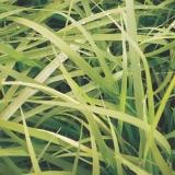 empresa especializada em semente de pasto para solo fértil Cajuru