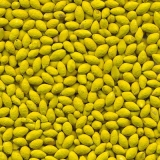 empresas que fazem fornecedor de sementes de pastagem revestidas Teresina