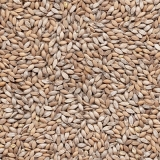 fornecedor de sementes de pastagem de alta qualidade valor Macapá