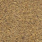 fornecedor de semente de pasto solo fértil