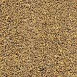 fornecedor de semente para pasto