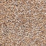 fornecedor de sementes de alta pureza para pastos
