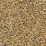 onde comprar semente forrageira para cobertura morta Angatuba