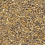 onde comprar semente forrageira para feno Vargem Grande do Sul