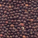 onde encontro semente de adubação Ituverava