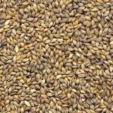onde tem semente formação pastagem Cruz Alta