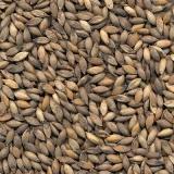 onde tem sementes para pastagem Taquaritinga
