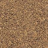 orçamento de sementes de capim aruana para cavalos Cunha