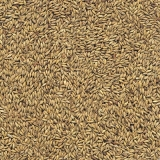 preço de semente de feno de cavalo Salvador