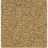 preço de semente forrageira de feno Frutal