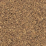 semente de capim aruana para gado leiteiro