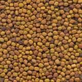 semente leguminosa banco de proteína Pereira Barreto