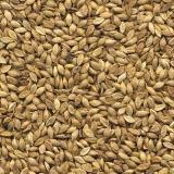 sementes de brachiaria humidicola