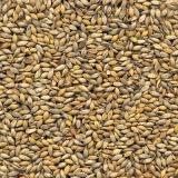 semente ruziziensis braquiária