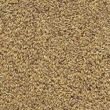 semente de feno de cavalo