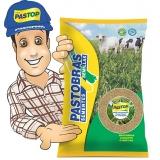 sementes de forrageiras de alta pureza barata Pernambuco