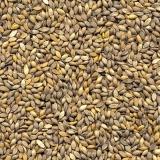 semente forrageira para feno