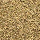semente grama para uso em jardim