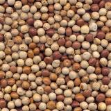 semente de leguminosas
