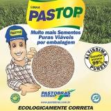 sementes para pastagem de alta pureza São Paulo