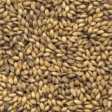 sementes de pastagem de alta qualidade