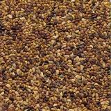 valor para semente leguminosa banco de proteína Presidente Epitácio