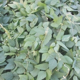valor para sementes leguminosas em atacado Brodowski