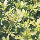 valor para sementes leguminosas pasto Sertãozinho