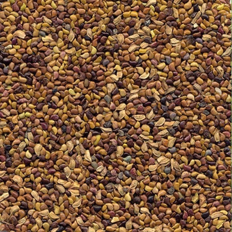 Valor para Semente Leguminosa Banco de Proteína Embu das Artes - Sementes Leguminosas para Plantio